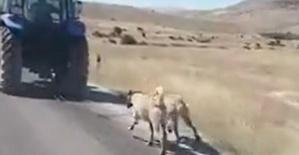 Köpekleri Koşturan Kişiye Ceza