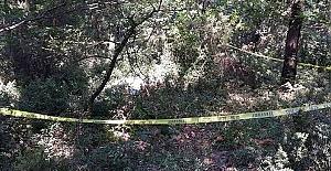 Hartlap Ormanında Cinayet