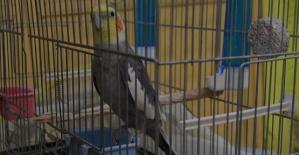 İlanla Aranan Papağan Bulundu