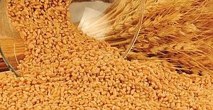 Buğday 1 Lira 74 Kuruş