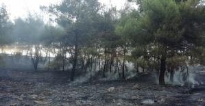 Kahramanmaraş'ta Anız Faciası Yine Yaktılar