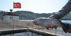 Kahramanmaraş'tan 25 Milyon Dolarlık Balık İhracatı