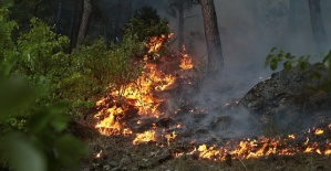 Kahramanmaraş'ta Orman Yandı