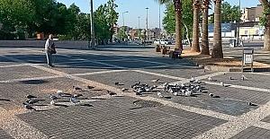 Kahramanmaraş'ta Güvercinler de Bayram Etti
